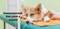 Химиотерапия для собак и кошек